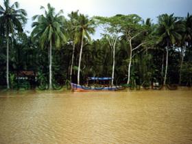 Boot in den Mangroven